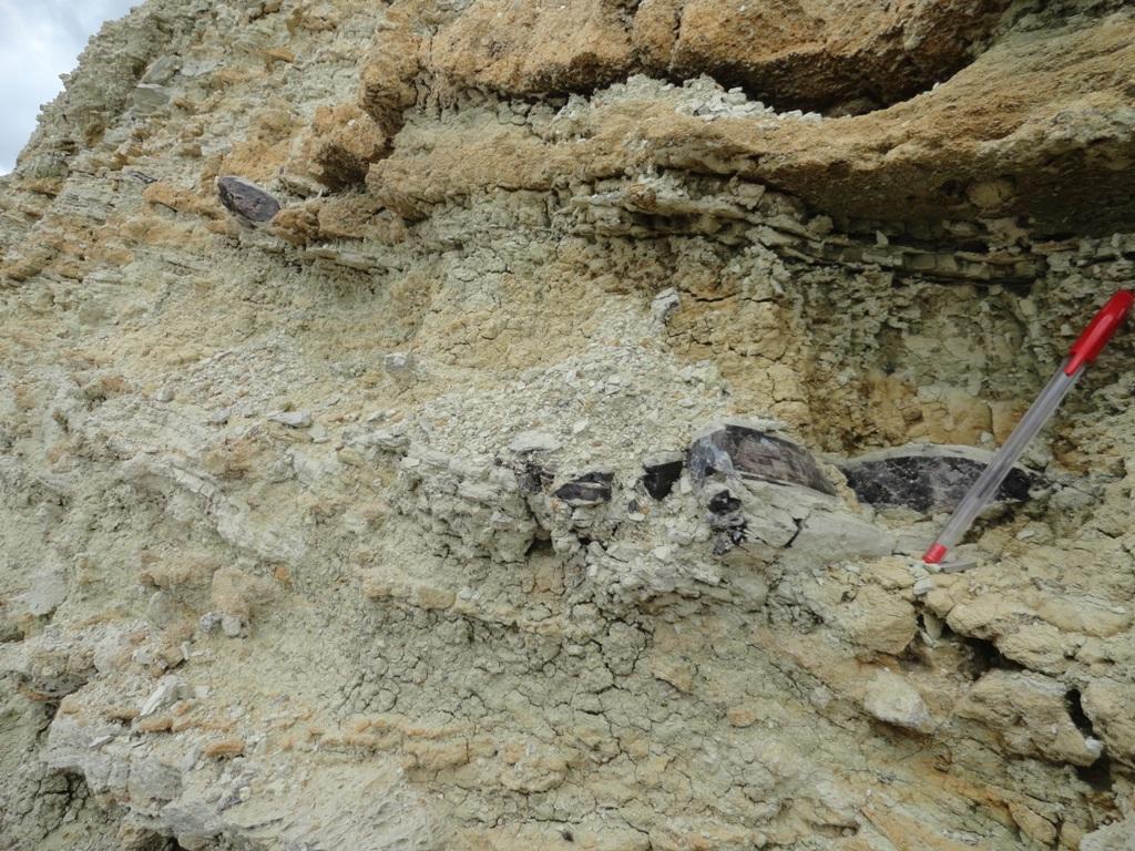 Excursion - Mine Fossils Identification9
